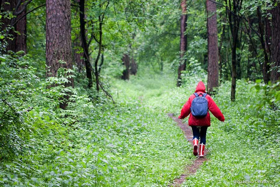 La foresta: un mondo di ispirazioni