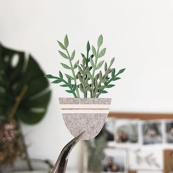 pianta carta
